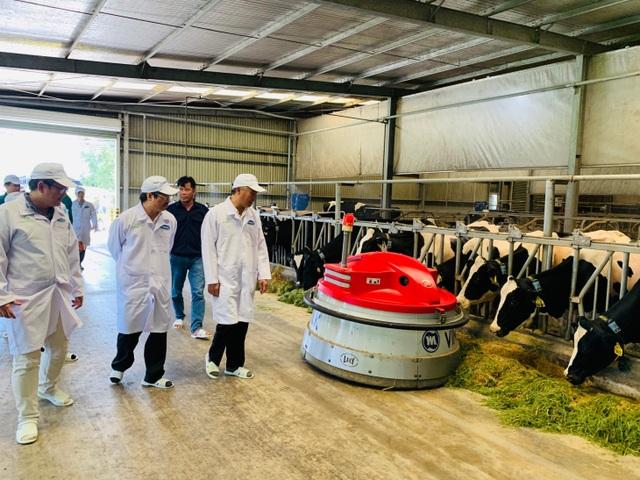"""""""Resort"""" bò sữa Tây Ninh là hạt nhân để xây dựng vùng chăn nuôi bò sữa an toàn - 2"""