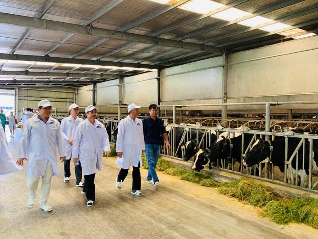 """""""Resort"""" bò sữa Tây Ninh là hạt nhân để xây dựng vùng chăn nuôi bò sữa an toàn - 3"""