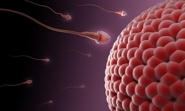 """""""Thảo dược"""" Maca – hỗ trợ tăng cường chất lượng tinh trùng - 2"""