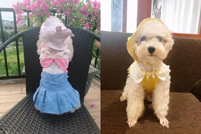 """Chú chó Hà Nội gây """"sốt"""" vì gu thời trang sành điệu, tạo dáng chuyên nghiệp như """"fashionista"""" - 4"""