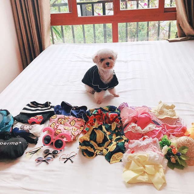 """Chú chó Hà Nội gây """"sốt"""" vì gu thời trang sành điệu, tạo dáng chuyên nghiệp như """"fashionista"""" - 2"""