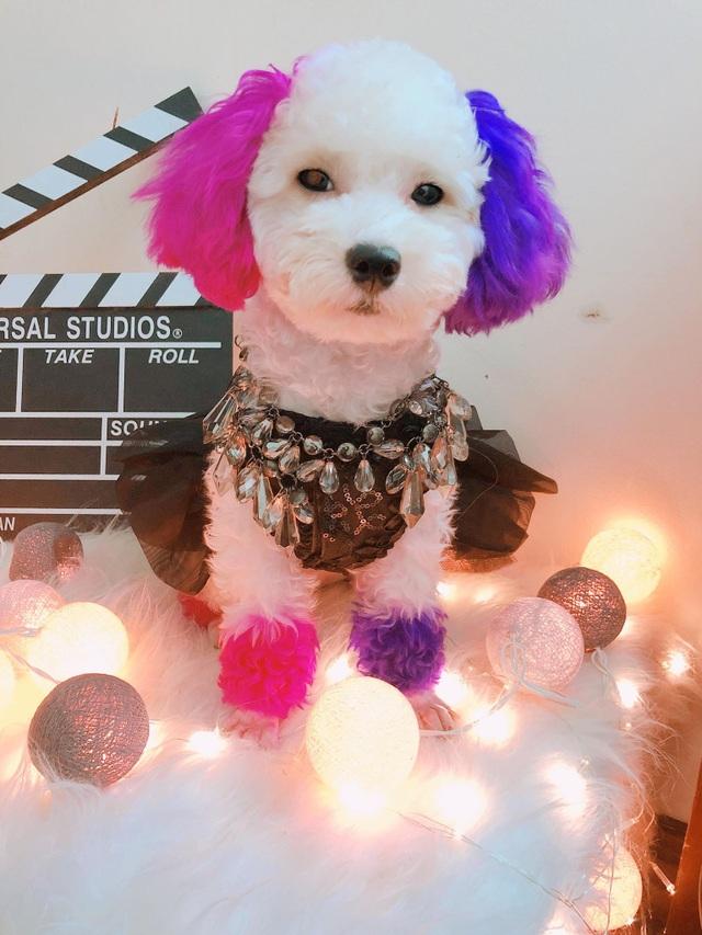 """Chú chó Hà Nội gây """"sốt"""" vì gu thời trang sành điệu, tạo dáng chuyên nghiệp như """"fashionista"""" - 6"""