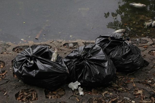 Hà Nội: Cá chết hàng loạt bốc mùi hôi thối trên hồ Trúc Bạch - 6