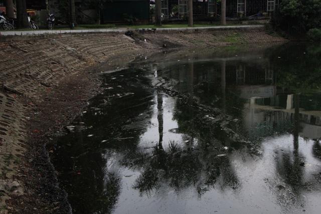 Hà Nội: Cá chết hàng loạt bốc mùi hôi thối trên hồ Trúc Bạch - 12