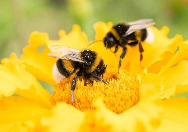 Hầu hết trẻ em nước Anh không biết đến con ong, loài bướm hay quả việt quất - 1