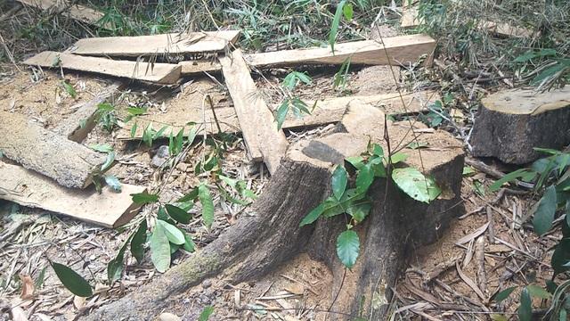Tiếng thét đau đớn của rừng xanh Tây Nguyên và những thước hình gây sốc! - 3