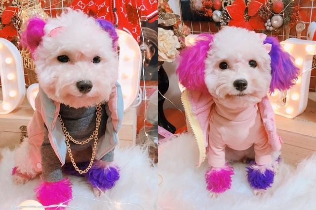 """Chú chó Hà Nội gây """"sốt"""" vì gu thời trang sành điệu, tạo dáng chuyên nghiệp như """"fashionista"""" - 5"""