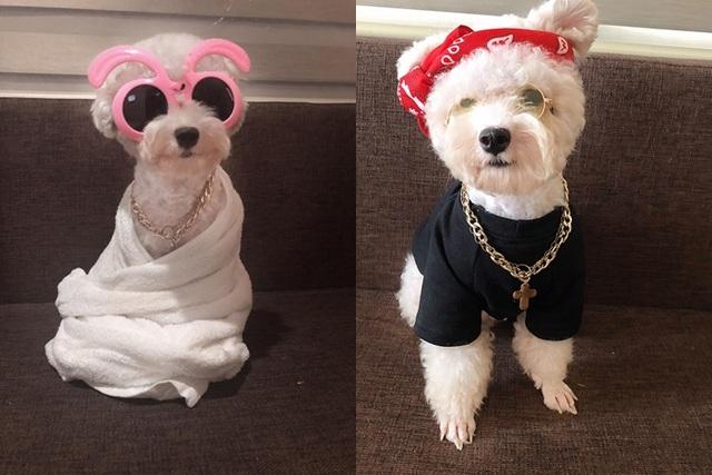 """Chú chó Hà Nội gây """"sốt"""" vì gu thời trang sành điệu, tạo dáng chuyên nghiệp như """"fashionista"""" - 7"""