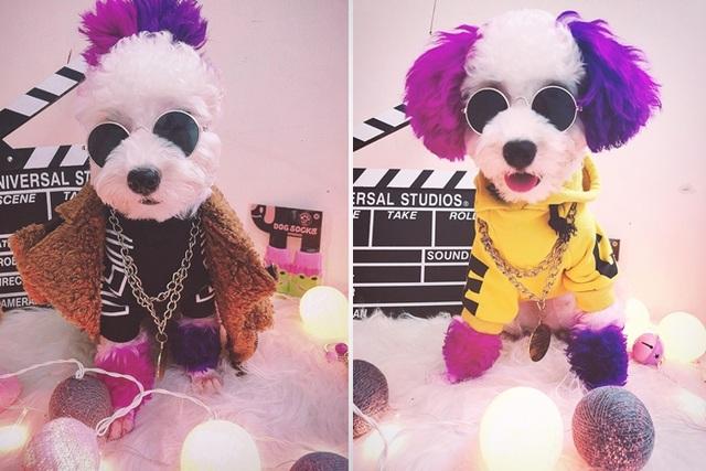 """Chú chó Hà Nội gây """"sốt"""" vì gu thời trang sành điệu, tạo dáng chuyên nghiệp như """"fashionista"""" - 8"""