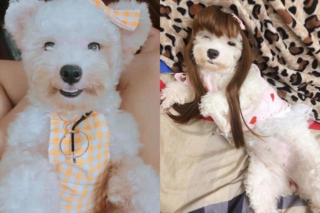 """Chú chó Hà Nội gây """"sốt"""" vì gu thời trang sành điệu, tạo dáng chuyên nghiệp như """"fashionista"""" - 9"""