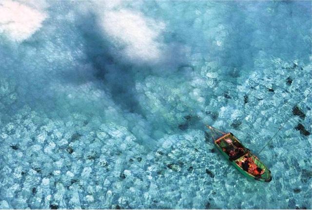"""""""Cơn khát"""" sò tai tượng của đội tàu Trung Quốc tàn phá Biển Đông - 2"""