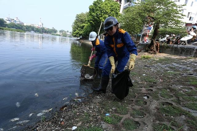Hà Nội: Cá chết hàng loạt bốc mùi hôi thối trên hồ Trúc Bạch - 17