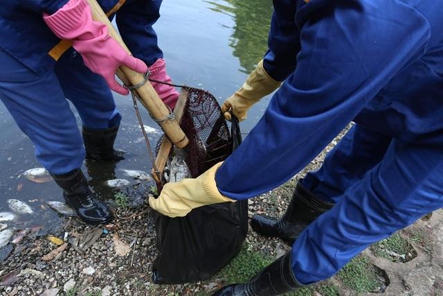 Hà Nội: Cá chết hàng loạt bốc mùi hôi thối trên hồ Trúc Bạch - 18