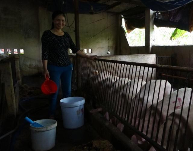 Đàn lợn nhiễm dịch tả lợn Châu phi tự nhiên… khỏe lại - 1