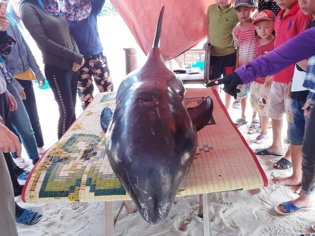 Giải cứu cá voi 150kg trôi dạt vào bờ biển - 1