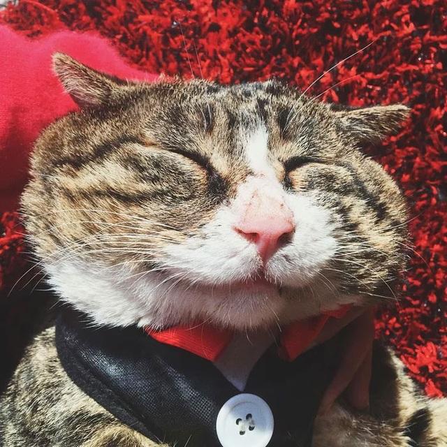 Chú mèo nổi tiếng mạng xã hội với biểu cảm gương mặt... hài hước   - 13