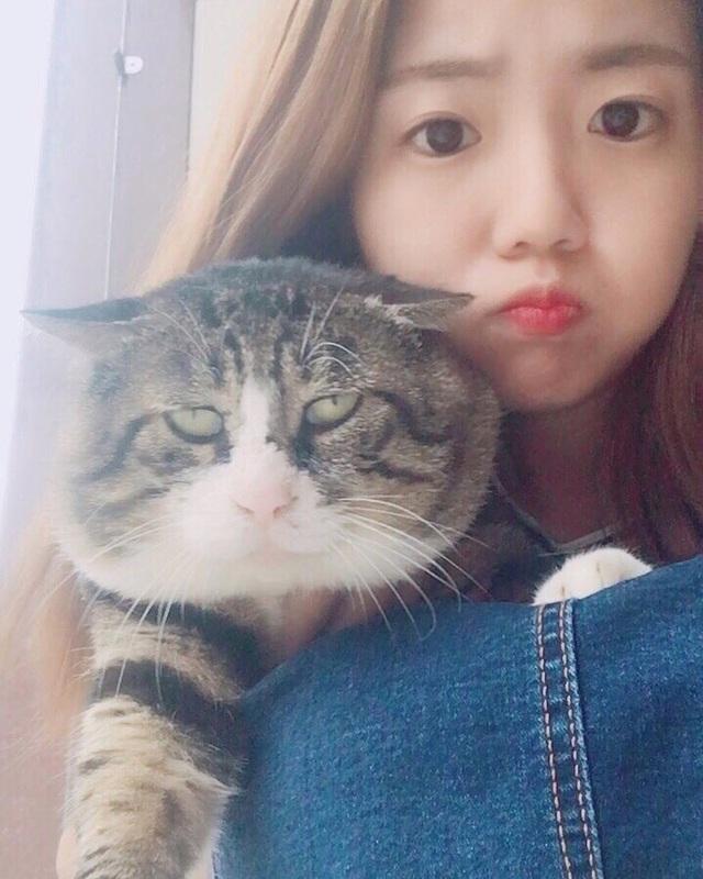 Chú mèo nổi tiếng mạng xã hội với biểu cảm gương mặt... hài hước   - 15