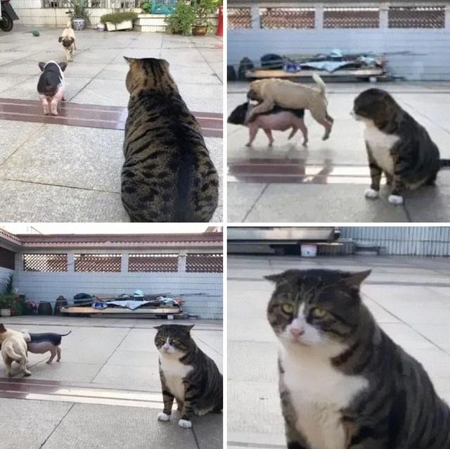 Chú mèo nổi tiếng mạng xã hội với biểu cảm gương mặt... hài hước   - 4