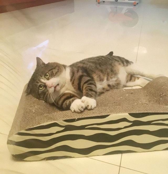 Chú mèo nổi tiếng mạng xã hội với biểu cảm gương mặt... hài hước   - 5