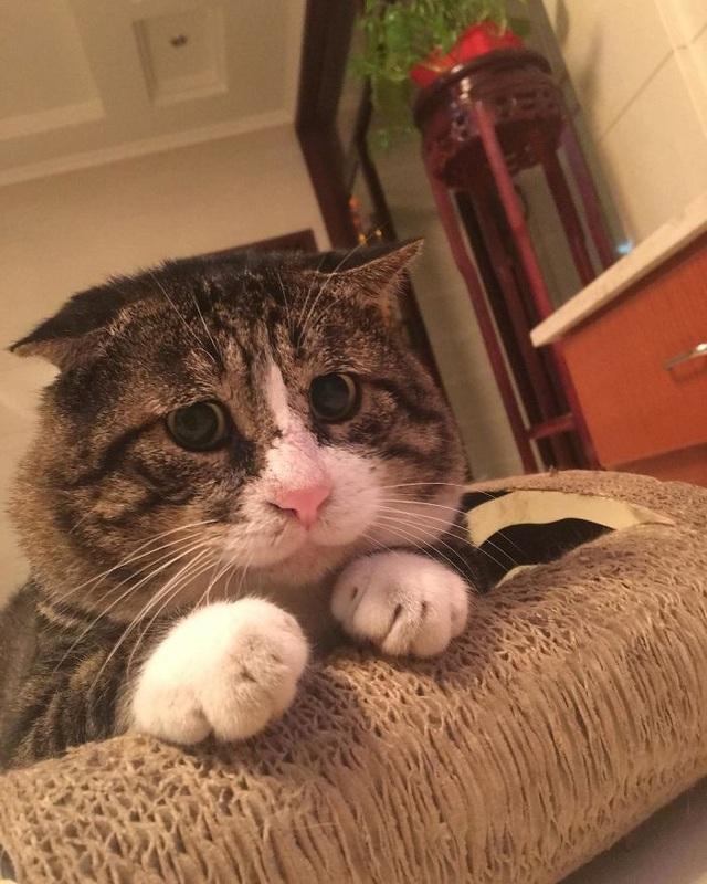 Chú mèo nổi tiếng mạng xã hội với biểu cảm gương mặt... hài hước   - 6
