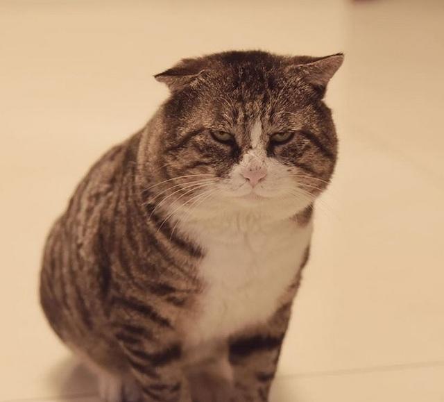 Chú mèo nổi tiếng mạng xã hội với biểu cảm gương mặt... hài hước   - 9