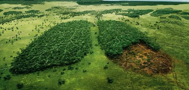 Chuyện gì sẽ xảy ra nếu toàn bộ cây xanh trên Trái Đất bị chặt hạ? - 2