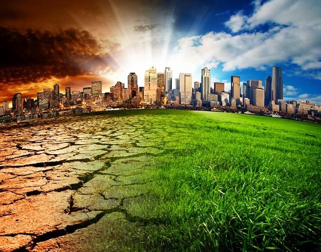 Chuyện gì sẽ xảy ra nếu toàn bộ cây xanh trên Trái Đất bị chặt hạ? - 7