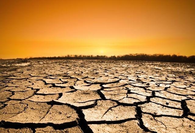 Chuyện gì sẽ xảy ra nếu toàn bộ cây xanh trên Trái Đất bị chặt hạ? - 9