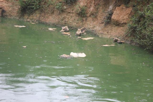 """Trang trại lợn """"tra tấn"""" người dân: Ngang nhiên xả thải, vứt xác lợn chết từ đầu nguồn nước - 7"""
