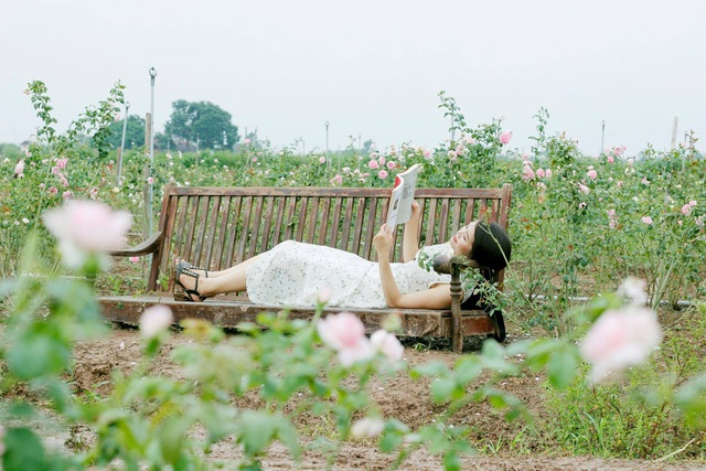 Nữ giám đốc đam mê hoa hồng, sở hữu trang trại hoa hồng đẹp như cổ tích hơn 30.000m2 - 6