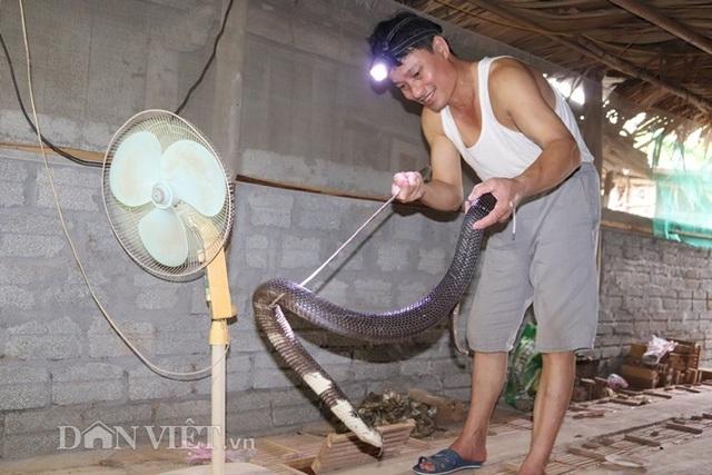 Ớn lạnh người đàn ông nuôi hơn 1.000 con mãng xà cực độc ở Lào Cai - 1