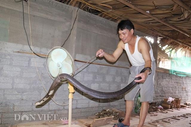 Ớn lạnh người đàn ông nuôi hơn 1.000 con mãng xà cực độc ở Lào Cai - 5