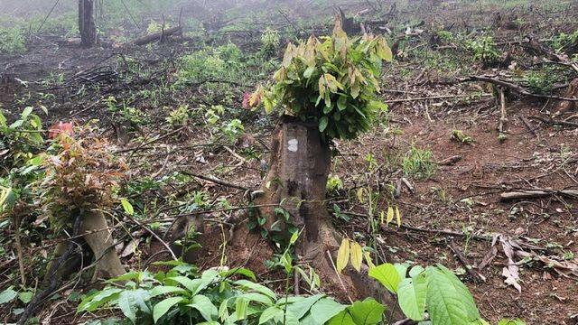 Khởi tố thêm 2 cán bộ huyện liên quan đền bù đất rừng - 1