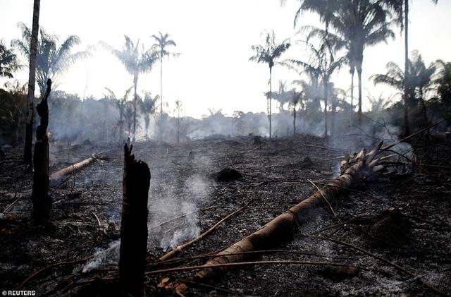 Bức ảnh phản ánh tình trạng hỏa hoạn khủng khiếp tàn phá lá phổi xanh Amazon - 6