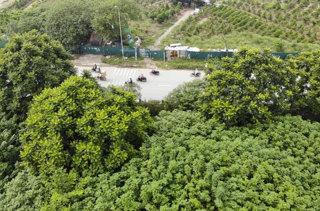 Nhìn từ trên cao rừng tái sinh suốt 24km dọc đại lộ Thăng Long - 3