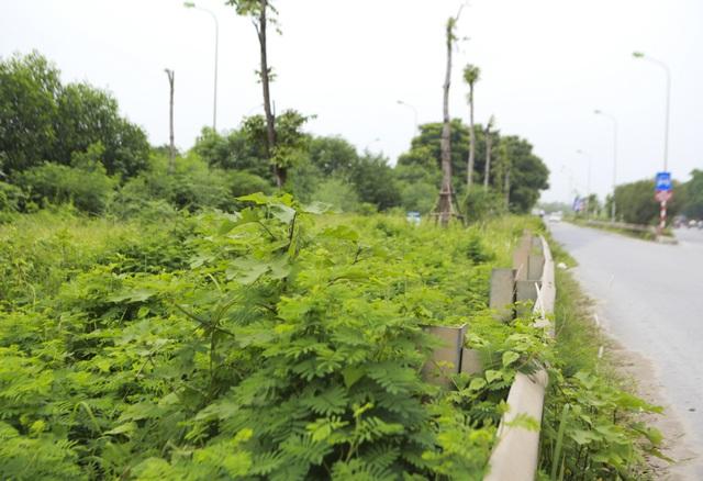 Nhìn từ trên cao rừng tái sinh suốt 24km dọc đại lộ Thăng Long - 9