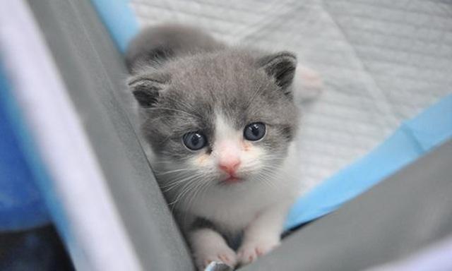 Hơn 800 triệu đồng cho một con mèo nhân bản tại Trung Quốc - 2