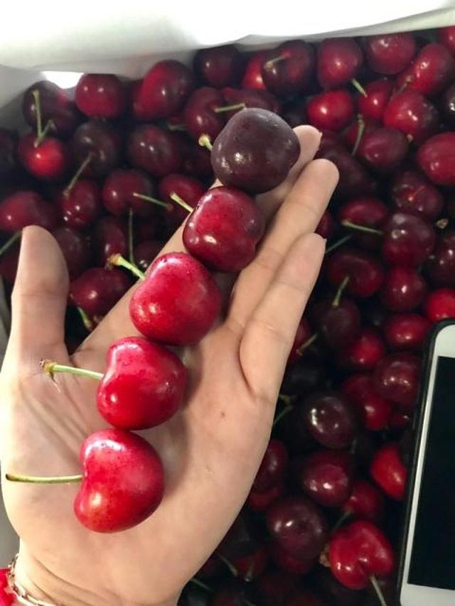 Thương chiến kéo tụt giá cherry: Hàng Mỹ hay đồ Trung Quốc? - 3