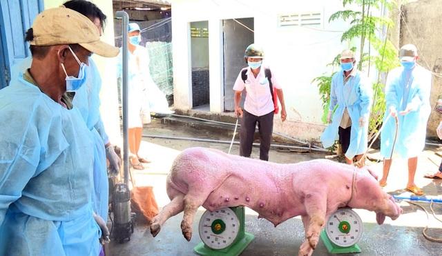 Phú Yên: Phát hiện thêm 2 ổ dịch tả lợn Châu Phi - 2