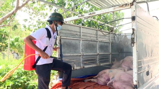 Phú Yên: Phát hiện thêm 2 ổ dịch tả lợn Châu Phi - 3