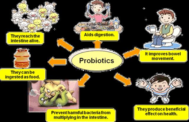 Hệ sinh vật trong đường ruột ảnh hưởng đến sức khỏe như thế nào? - 2