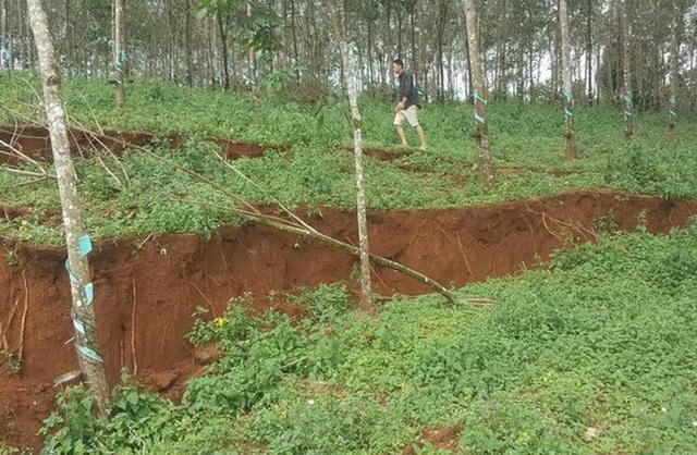 Sụt lún, sạt lở cạnh hồ bùn đỏ Nhà máy Alumin Đắk Nông - 4