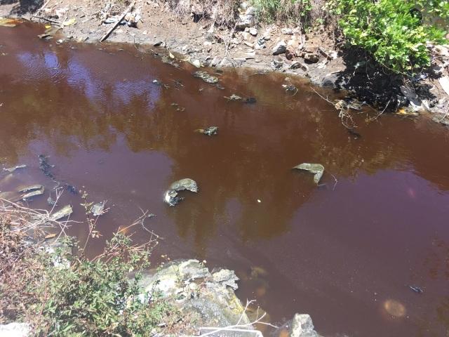 Dân khốn khổ khi chung sống với kênh thoát nước đen ngòm, ngập rác thải - 9