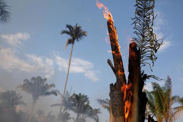 Ảnh: Giật mình trước mức độ cháy rừng ở Amazon - lá phổi của hành tinh - 10