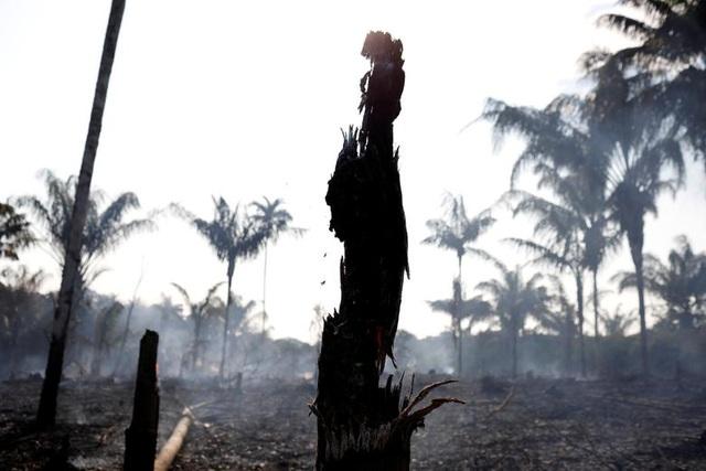 Ảnh: Giật mình trước mức độ cháy rừng ở Amazon - lá phổi của hành tinh - 12
