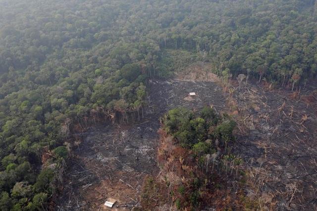 Ảnh: Giật mình trước mức độ cháy rừng ở Amazon - lá phổi của hành tinh - 13