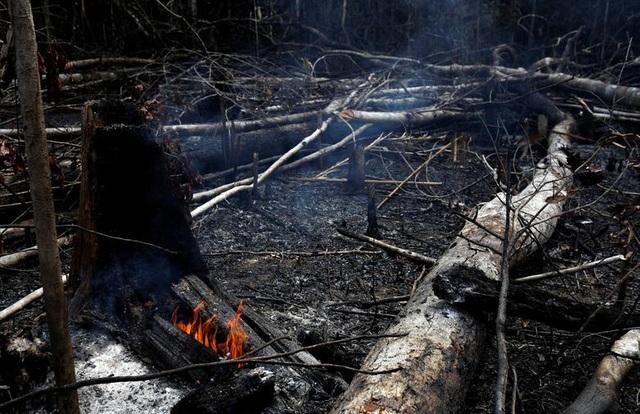 Ảnh: Giật mình trước mức độ cháy rừng ở Amazon - lá phổi của hành tinh - 14