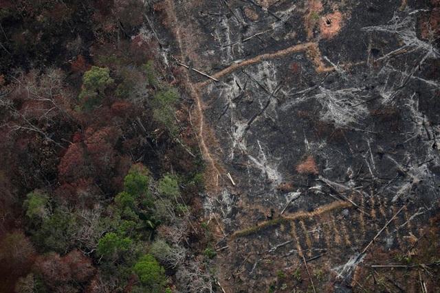 Ảnh: Giật mình trước mức độ cháy rừng ở Amazon - lá phổi của hành tinh - 5