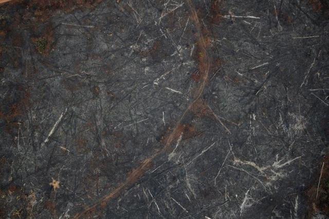 Ảnh: Giật mình trước mức độ cháy rừng ở Amazon - lá phổi của hành tinh - 8