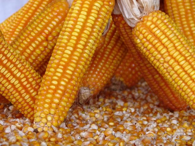 Ủy ban Châu Âu cấp phép 10 sinh vật biến đổi gen - 1